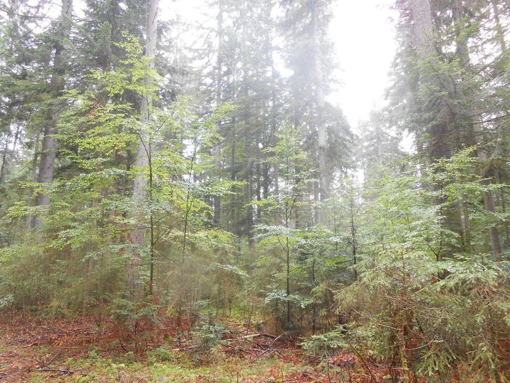 EU-Parlament billigt Gesetzvorschlag zur CO2-Bindung in Wäldern